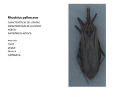Rhodnius pallescens