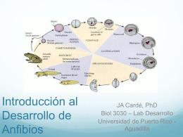 Introducción al Desarrollo de Anfibios