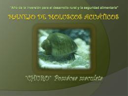 Manejo de moluscos acuáticos (2)