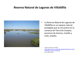 Lagunas de Villafáfila. Vegetación