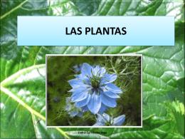 las plantas carnívoras se pueden utilizar como propósito medicinal