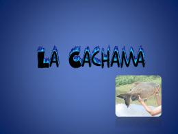 expo_cachama