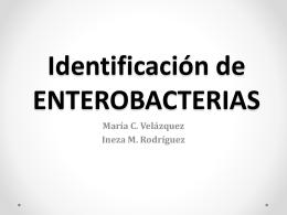 Identificacción de enterobacterias