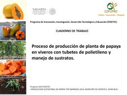 descargar - cultivo de papaya