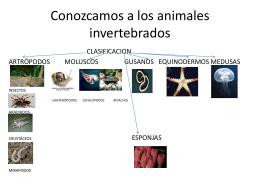 Conozcamos a los animales invertebrados - biologia