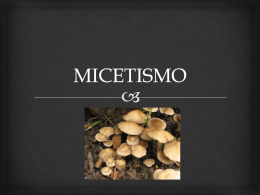 MICETISMO - Micologiaunsl