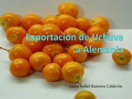 Exportación de Uchuva (1)