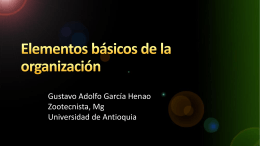 Organización Formal - Universidad de Antioquia