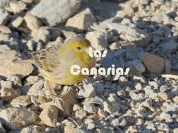 canarias, paul et remy