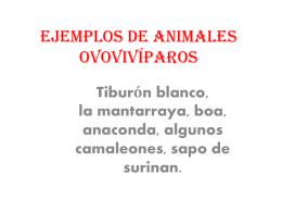 Ejemplos de animales ovovíparos