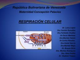 Metabolismo Aerobio (2889342)