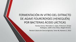 fermentación in vitro del extracto de agave fourcroydes