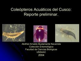 Coleópteros Acuáticos del Cusco