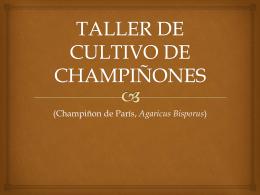 TALLER DE CULTIVO DE CHAMPIÑONES
