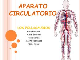 DESCARGAR Aparato circulatorio I (Pollasaurios)