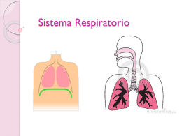 Sistema_Respiratorio..