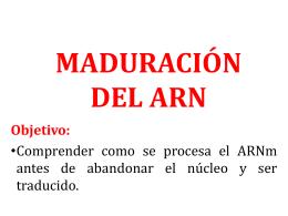 maduración del arn