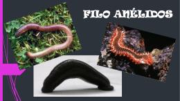 FILO ANÉLIDOS (2414904)