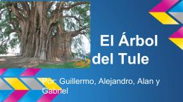 El Árbol del Tule - Alan Geifman´s 8th Grade Portfolio