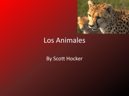 Los Animales - Scott Portfolio 7