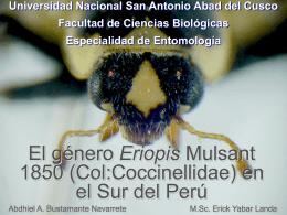 Eriopis (Col:Coccinellidae) del Cusco