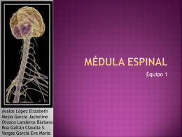 Medula espinal - Leonardo Gastelum Verdugo
