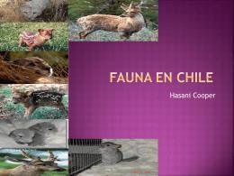 Patagonian Puma