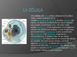 La célula - wwwjuanjosehoyoscom