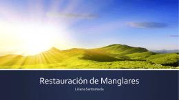 Restauración de Manglares