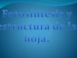 Fotosíntesis y estructura de la hoja