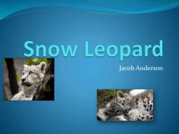 Snow Leopard - Unicornio con bigote