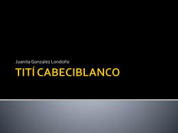 TITÍ CABECIBLANCO - Ms. Marcos` Biology Wiki