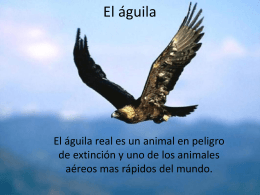 El aguila - WordPress.com