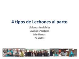Producción Porcina en Uruguay Opciones y Alternativas