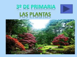 las plantas. 3º primaria