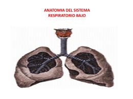 SISTEM pulmonares bajoOoS