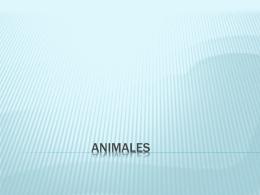 animales - ActividadesInteractivas