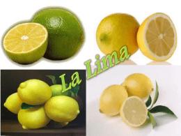 lima - muchcitrus