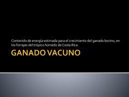 GANADO VACUNO