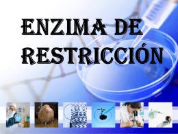 Enzima De Restricción