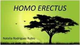 homo erectus pekinensis