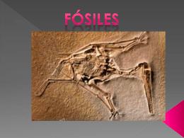 fósiles - juliohdz