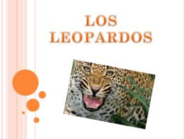 leopardo - CEIP La Zafra