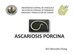 Ascariosis Porcina - Saber UCV