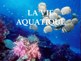 LAVIE AQUATIQUE - Mercadeo-UNITEC