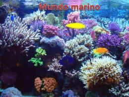 Mundo Marino - anahirobles