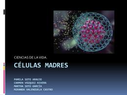 Células madres - WordPress.com