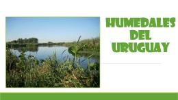 HUMEDALES DEL URUGUAY (2424703)
