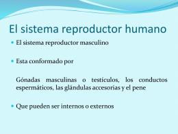 El sistema reproductor humano.