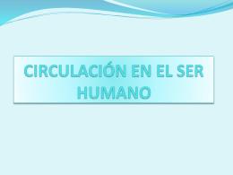 CIRCULACIÓN EN EL SER HUMANO